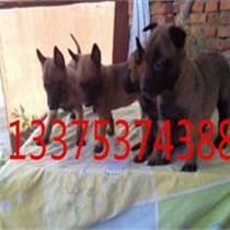 武漢哪里有純種馬犬養殖場