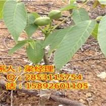 山東早熟核桃苗品種