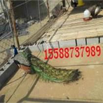 天津鴕鳥蛋多少錢、鴕鳥蛋的價格