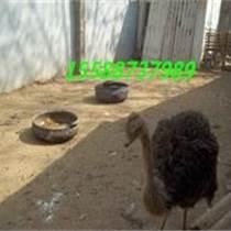 陕西鸵鸟蛋多少钱、鸵鸟蛋的价格