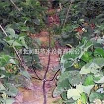 优质花卉无土栽培灌溉滴箭