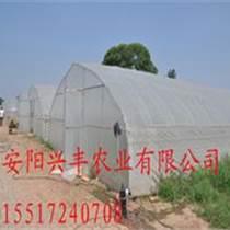 蔬菜溫室大棚興豐專業施工團隊