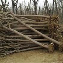 四川胸径20公分国槐供应
