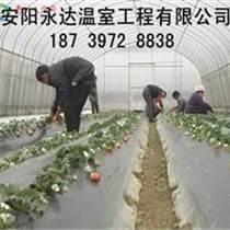 大同草莓采摘園大棚專業建造規劃