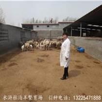 龙江县杜泊羊多少钱?