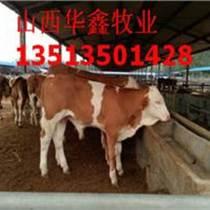 安徽肉牛價格