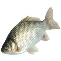 供應鯽魚,鳊魚花鰱等各種淡水魚