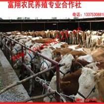 國家大型養殖基地 供應肉牛