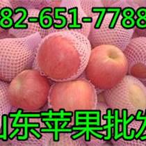 優質山東紅富士蘋果基地 煙臺蘋果行情