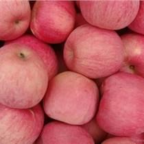 山東蘋果產地供應信譽保證