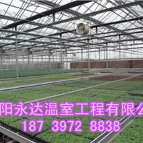 河南建造雙梁花卉溫室大棚施工隊