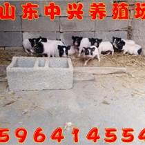 安徽附近有香豬養殖場嗎