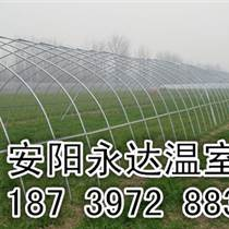 春秋拱棚價格花卉溫室建造典范