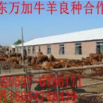 贵州小牛犊最新价格