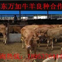 徐州肉牛价格