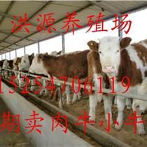 现在小牛犊的价格