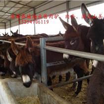 肉驴的生长周期是几个月