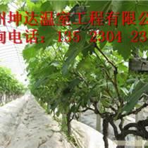 鄭州蔬菜溫室大棚種植技術指導