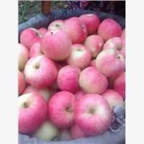 低價出售山東紅富士蘋果