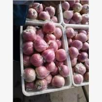 供銷山東紅富士蘋果價格