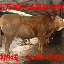 肉牛批发市场