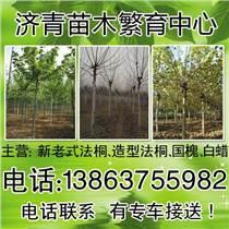 臨沂海棠種植培育基地