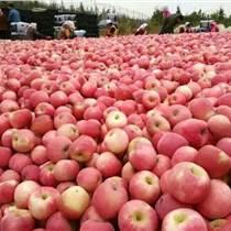 蘋果報價今日山東紅富士蘋果價格