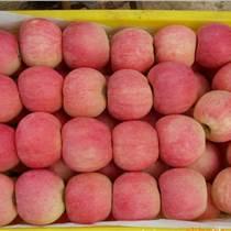 今日蘋果報價山東紅富士蘋果價格