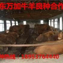 南京肉牛价格