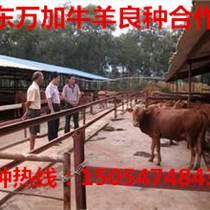 淮安肉牛价格