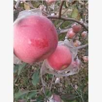 陕西红富士苹果价格批发价格行情