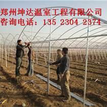 濮陽草莓種植拱棚連體設計