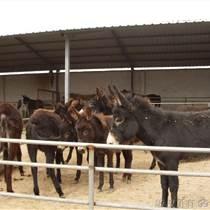 哪里有卖三粉驴乌头驴种驴肉驴驹的