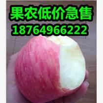 山東紅富士蘋果產地蘋果批發價格