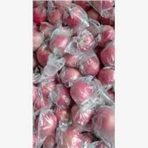 供應陜西大荔縣膜袋粉紅女士蘋果
