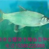 石家庄鲴鱼水花