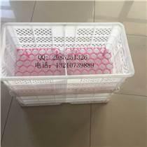白色塑料雞蛋箱 運輸專用蛋框 熱銷加大雞蛋筐廠家批發