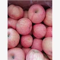 今日山東紅富士蘋果報價萬畝蘋果