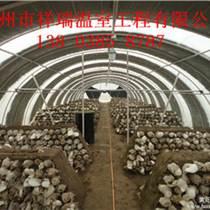 蘑菇培养技术大棚温室搭建技术