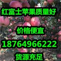 山東紅富士蘋果供應基地價格