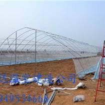 草莓大棚建设技术通达供应大棚建造报价