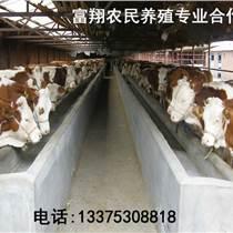 肉牛供應富翔養殖出售海福特肉牛