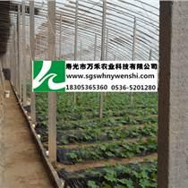 蔬菜温室大棚-有立柱冬暖式大棚