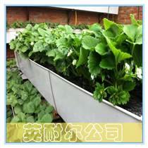 英耐爾草莓立體種植槽