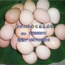 绍兴珍珠鸡苗珍禽养殖基地