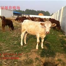 昊綠源肉牛養殖場供應夏洛萊肉牛