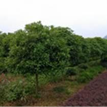 决定湖南绿化苗木的因素是什么?