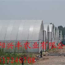 塑料大棚有怎樣的性能特點 蔬菜大棚 養殖大棚的建造