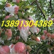今日陕西红富士苹果产地批发行情