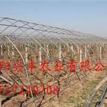 河南大棚建造 草莓果蔬大棚 批發大銷售棚配件